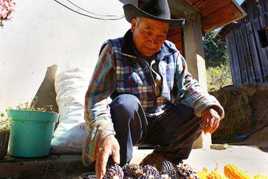 Oaxaca: Bauer mit einheimischem Mais / archivodeproyectos, flickr